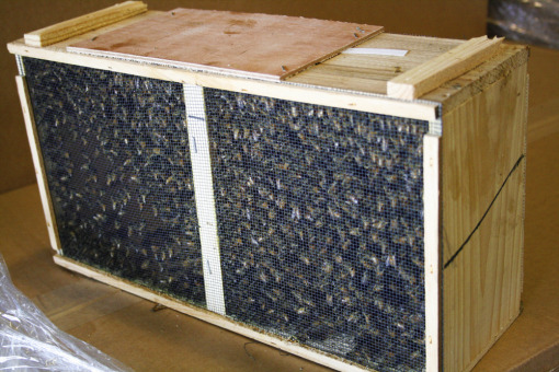 package_bees